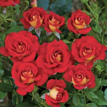 The Cottage Bouquet