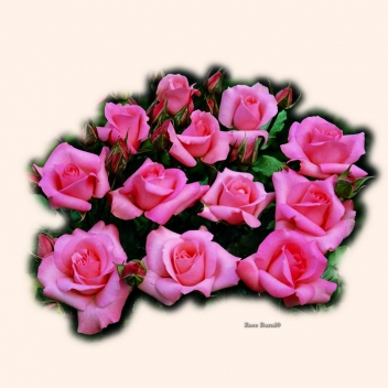 VENERE ® @ Rose Barni