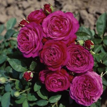 HEIDI KLUM ® @ Rose Barni
