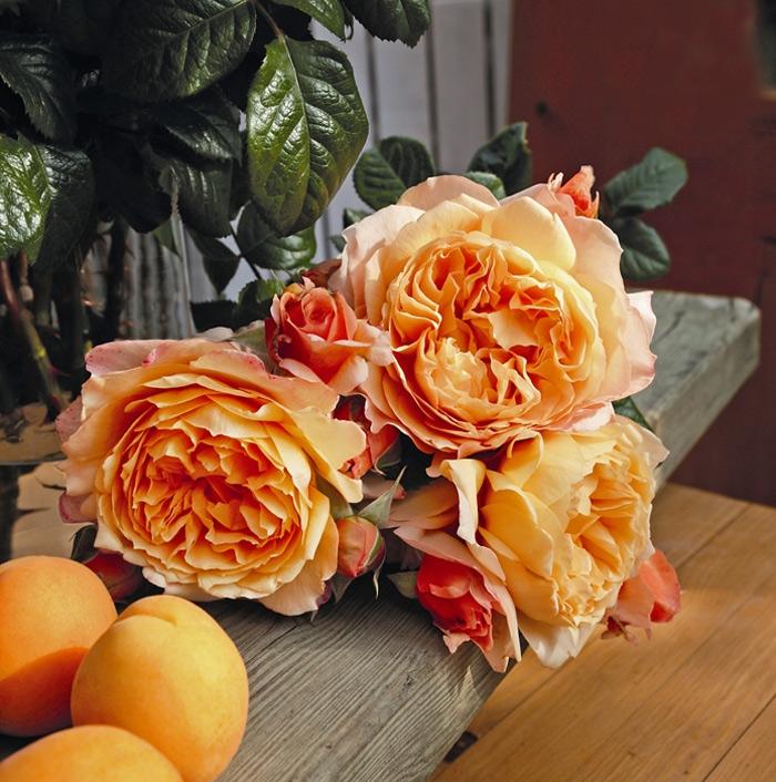 capri® | cod.01330 | Rose Barni