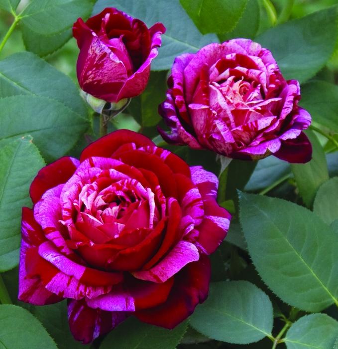 offerta novita' vaso | cod.71216 | Rose Barni