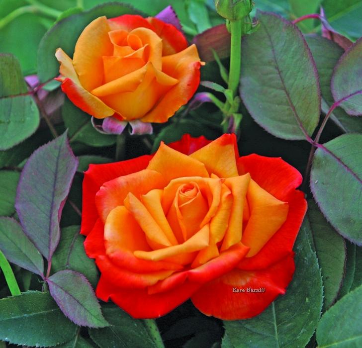 offerta raffinatezza vaso 2019 | cod.71232 | Rose Barni