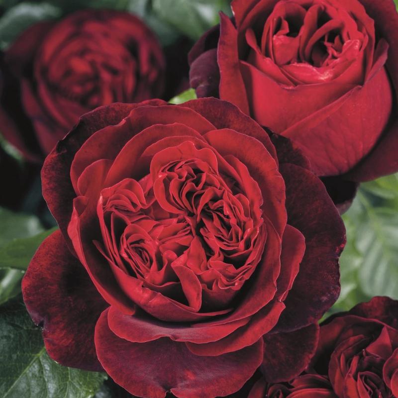 offerta nostalgiche vaso | cod.71310 | Rose Barni